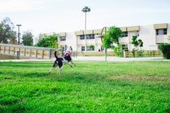Min hund Lala hoppar och hoppar royaltyfri foto