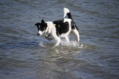 Min hundkapplöpning som tycker om ett bad royaltyfri bild