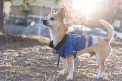 Min hundmango Royaltyfri Fotografi