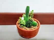 Min kaktus royaltyfri foto