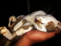 min katt royaltyfri bild