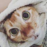 min katt Royaltyfri Fotografi