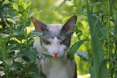 min katt Arkivfoton