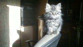 min katt Fotografering för Bildbyråer