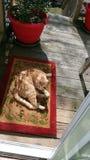 Min katt för Sonny pojke som sover på däck royaltyfri fotografi
