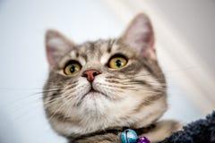 Min katt grundar förvånansvärt en fluga i mitt hus Fotografering för Bildbyråer