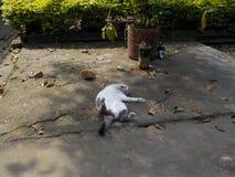 Min katt som tar en ta sig en tupplur Royaltyfri Foto
