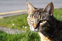 Min kattstålar, min bästa vän Royaltyfri Foto