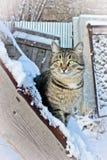 Min kattunge i snö royaltyfria bilder