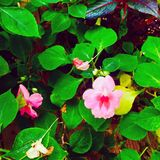 Min little trädgård Royaltyfri Bild