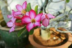 Min mums orkidé nära bilfarstubron royaltyfri bild