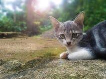 Min nätta Kitty Cat Looking på MIG fotografering för bildbyråer