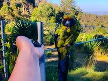 Min papegoja äter royaltyfria bilder