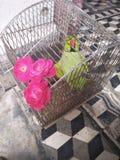 Min papegoja poserar in Royaltyfri Foto