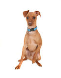 Min pin Royalty Free Stock Images