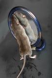 Min reflexion Royaltyfri Fotografi