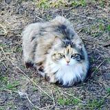 Min söta katt Kika i varm vårdag! royaltyfria foton