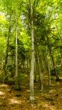 Min skogfantasi royaltyfri fotografi