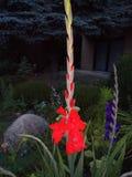 Min sommarträdgård Royaltyfri Bild