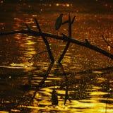 Min sort av solnedgången Fotografering för Bildbyråer