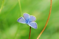 min sträckande vingar Fotografering för Bildbyråer