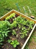 min trädgård 2 Arkivbilder