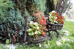 Min trädgård Arkivfoto