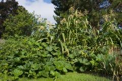 Min trädgård Royaltyfri Bild