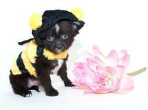 Mina de la abeja Fotografía de archivo