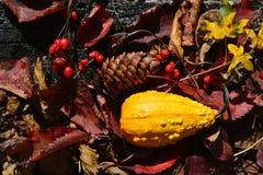 mina favorit- färger av hösten royaltyfria bilder