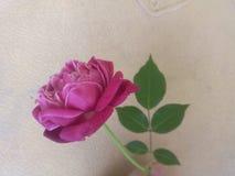 Mina härliga blommor Royaltyfri Fotografi