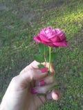 Mina härliga blommor Arkivbilder