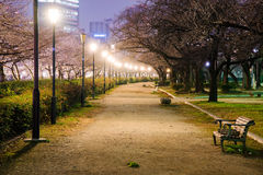 Mina Temma park przy nighttime obraz royalty free