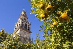 Minaret of the Mezquita de Cordoba, Spain Stock Images
