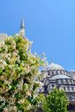 Minaret och kupol med blommasidor på himmelbakgrund Royaltyfria Bilder