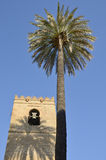 Minaret and palm Royalty Free Stock Photography