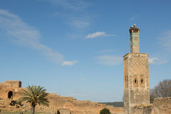 Minaret and storks Stock Photography