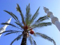 Minarets of mosques. Three minarets of muslim mosques and date palms against the blue sky Royalty Free Stock Images