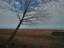 Minas basen w nowa Scotia fotografia stock
