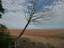 Minas Basin in Nova Scotia stock images