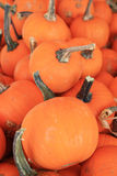 Minature pumpkins Royalty Free Stock Photo