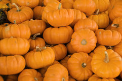 Minature Pumpkins Royalty Free Stock Photos