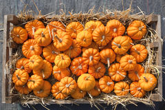 Minature pumpkins Royalty Free Stock Images