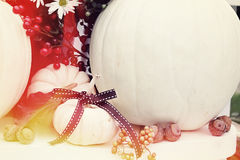 Minature White Pumpkins Stock Images