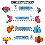 Mince ensemble organe humain de concept d'illustration au trait Image stock