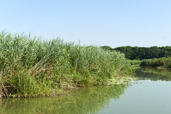 Mincio River Stock Photography