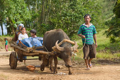 Mindanao farming family. Asian poor farmer's family returning from the fields on a cart with a draft water buffalo in a remote village on the fertile volcanic Stock Images