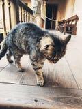 Minde del gato Fotos de archivo libres de regalías