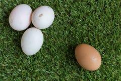 Minderheidsconcept: één wit ei is geïsoleerd van een groep bro Royalty-vrije Stock Foto's