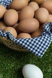 Minderheidsconcept: één wit ei is geïsoleerd van een groep bro Royalty-vrije Stock Fotografie